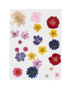 Kuivatut kukat, värilajitelma, 1 pkk