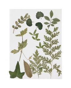 Kuivatut lehdet, vihreä, 1 pkk