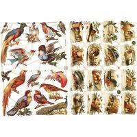 Kiiltokuvat, linnut, 16,5x23,5 cm, 2 ark/ 1 pkk